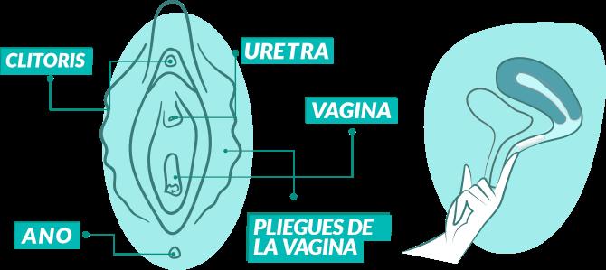 Insertar una pelota en tu vagina
